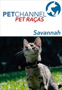 Pet Raças - Gatos Savannah