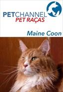 Pet Raças - Gatos Maine Coon