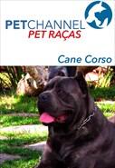 Pet Raças - Cães Cane Corso