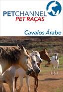 Pet Raças - Cavalos Árabes