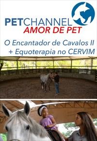 Amor de Pet - O Encantador de Cavalos - Parte 2