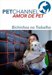 Amor de Pet- Bichinhos no Trabalho
