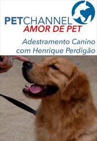 Amor de Pet- Adestramento Canino com Henrique Perdigão
