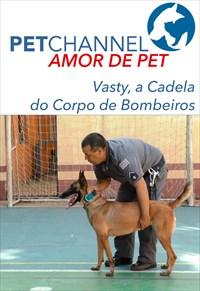 Amor de Pet- Vasty, a Cadela de Resgate do Corpo de Bombeiros
