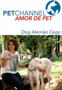 Amor de Pet- Dogue Alemão Cego