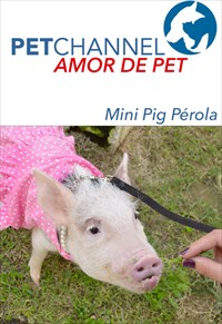 Amor de Pet- Mini Pig Pérola