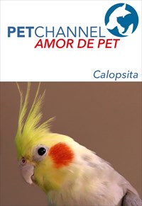 Amor de Pet - Jaquinha, a Dócil Calopsita