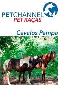 Pet Raças - Cavalos Pampa
