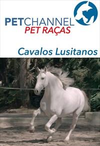 Pet Raças - Cavalos Lusitano