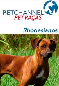 Pet Raças - Cães Rodesiano