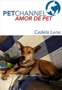 Amor de Pet - Cadela Luna