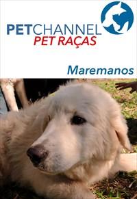 Pet Raças - Maremano